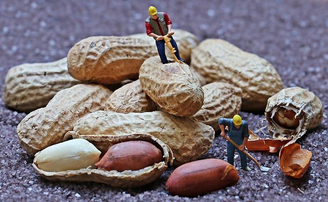 robotníci na arašidoch.jpg